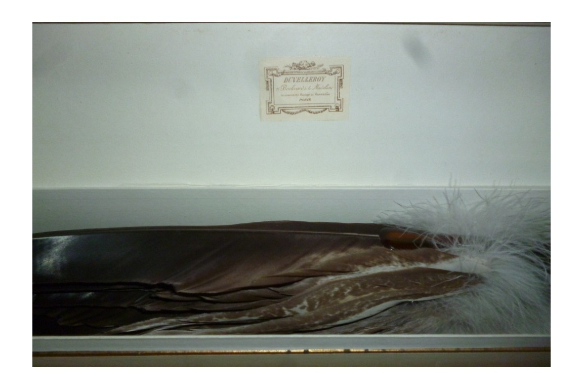Aigle, éventail Duvelleroy, fin XIXème début XXème
